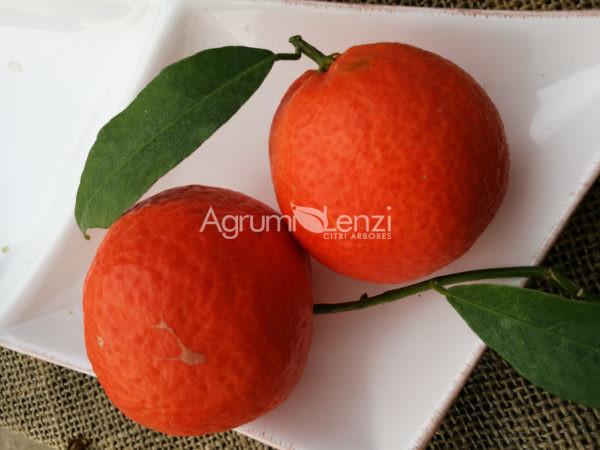 Clementino x Tangerino Dancy