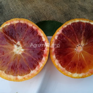 Arancio Tarocco Ippolito