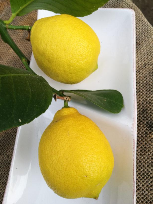 Limone di Mentone