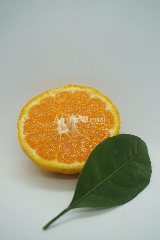 Mandarino Satsuma Okitsu