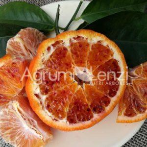 Tarocco Sciara x Clementine