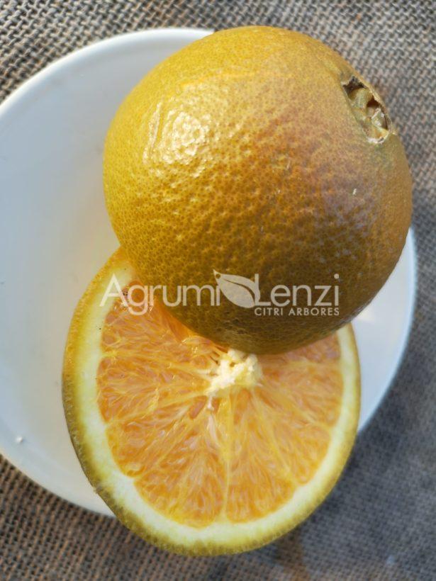 Arancio Chocolate